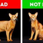 cat acts strangely