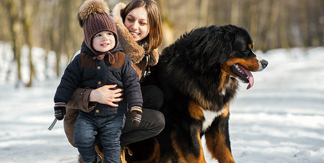 best attack dogs breeds