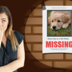 find lost dog